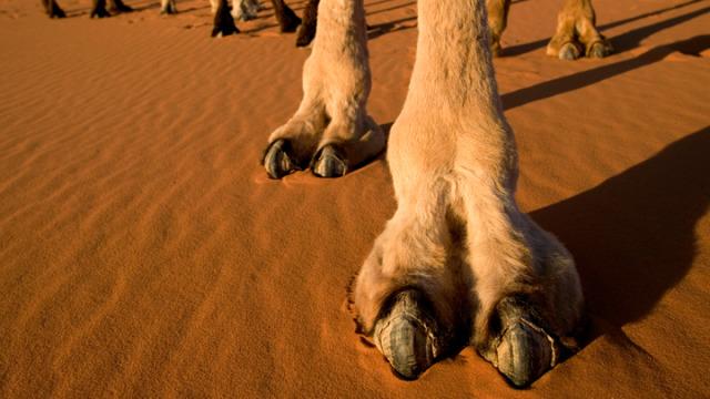 Cómo evitar el camel toe