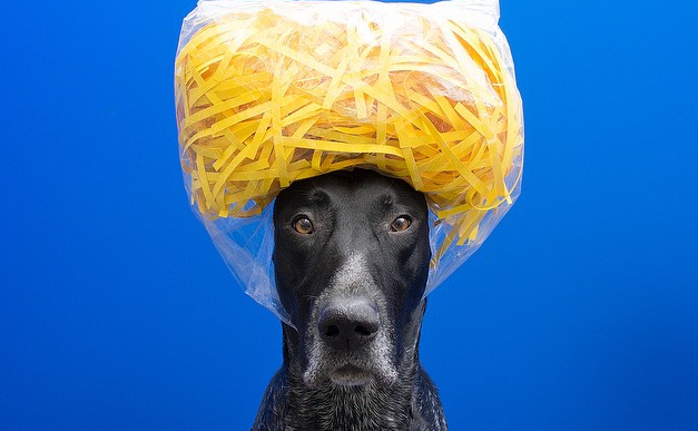 Un perro muy serio retratado con peculiares objetos