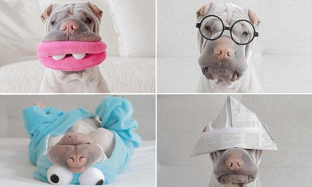 Paddington, el adorable perro de los mil y un disfraces en Instagram