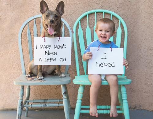 Dog Shaming: Adorables perros confesando sus delitos