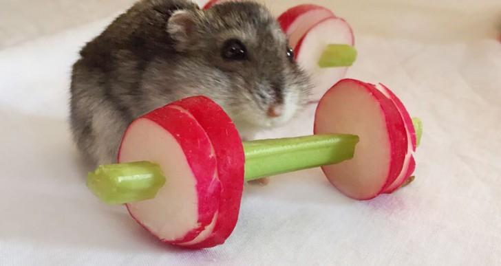 Un gimnasio vegetal para hámsters que no aman el ejercicio