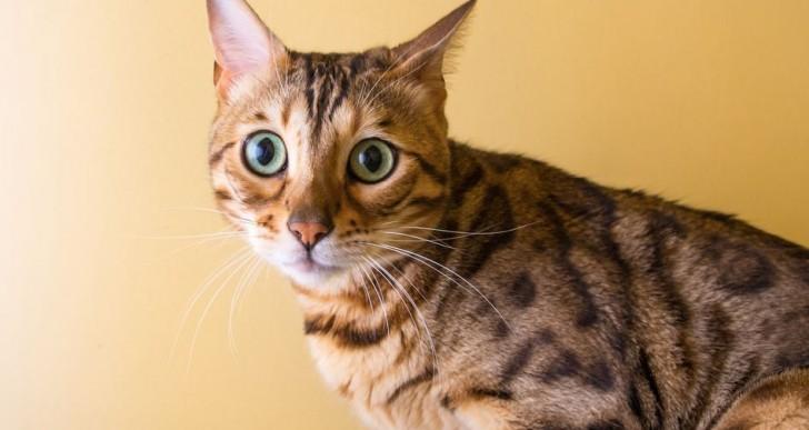 8 curiosas fotos de gatitos súper expresivos