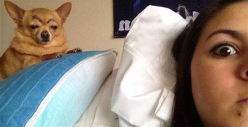 8 mascotas que fueron víctimas de Snapchat