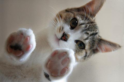 El manual para comunicarte con tu gato
