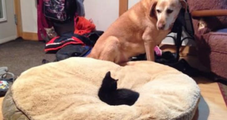 22 perros que perdieron sus camas por sus gatos