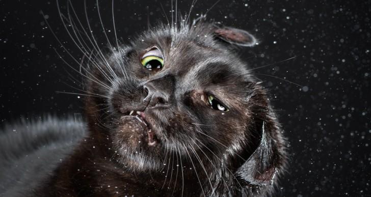 Seguro nunca has visto la cara de un gato a media sacudida