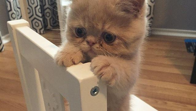 Este adorable gato disfruta pararse en dos patas, como un humano