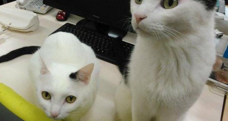 Esta empresa adoptó a 9 gatos y mejoró la productividad