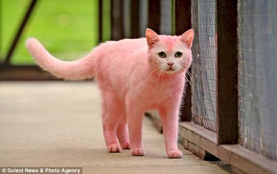 10 gatos que merecen una medalla por su infinita paciencia