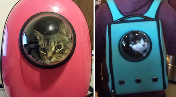 Este genial backpack te permitirá llevar a tu gato a donde quieras