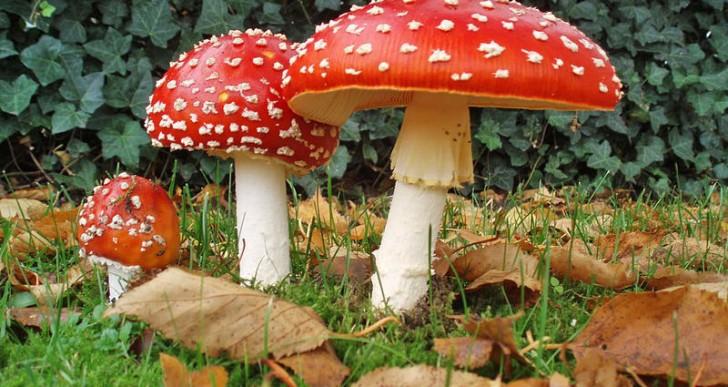 Los hongos alucinógenos pueden curar fobias y otros traumas