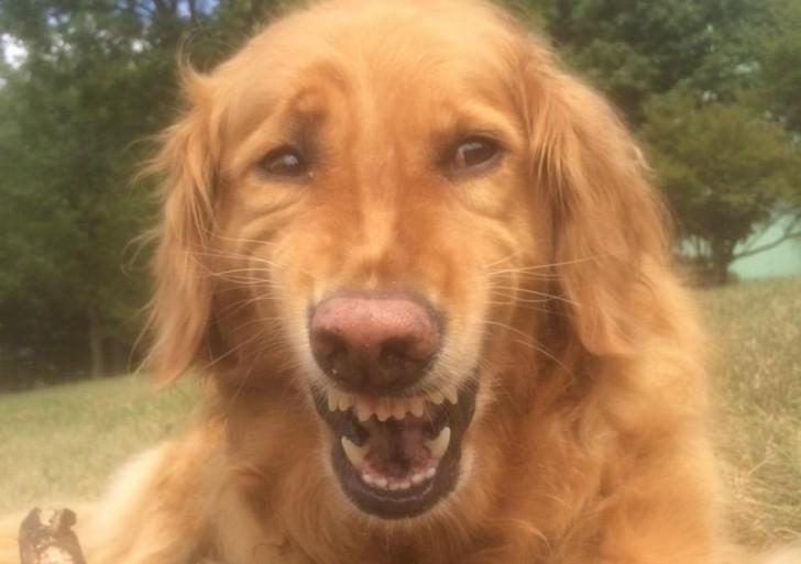 Te retamos a no reírte al ver a estos chistosos perros