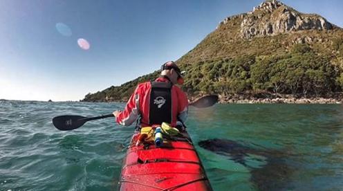 Esta orca ha nadado junto a su kayakista por años