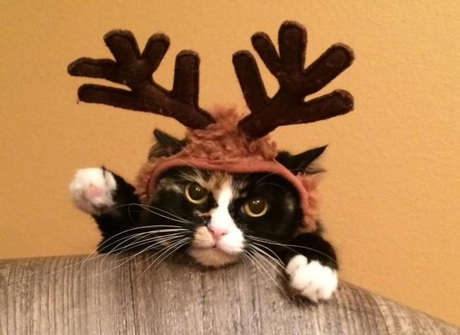 8 mascotas que detestan Navidad