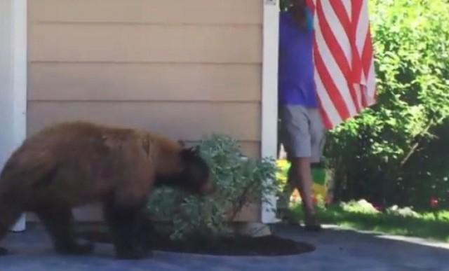Mira la chistosa reacción de un oso y un hombre cuando se encuentran