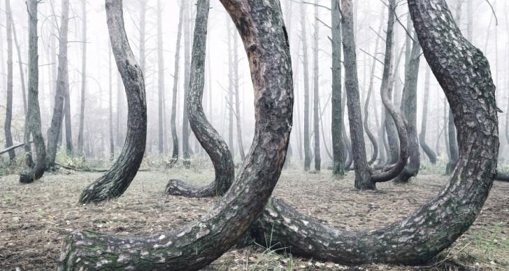 Nadie puede explicar por qué este bosque esta todo chueco