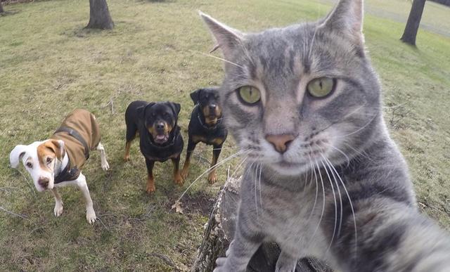 Conoce a Manny, el gato que ha dominado el arte de las selfies