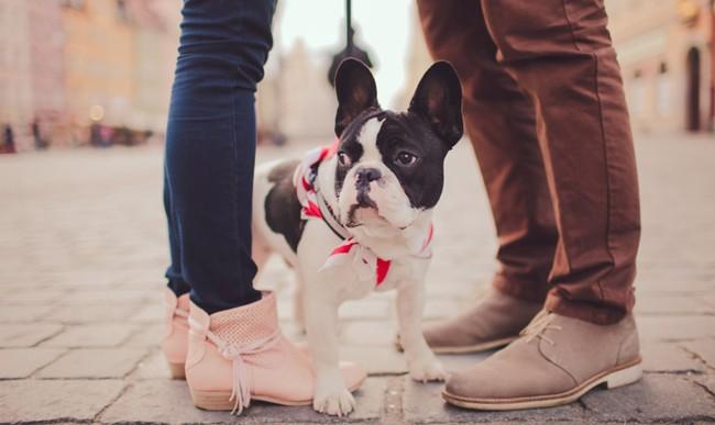 5 cosas que nunca deberías de hacer enfrente de tu perro