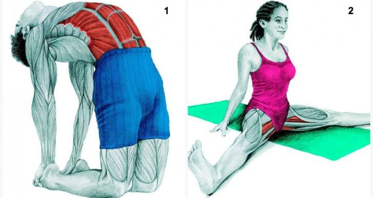 Estas imágenes te muestran exactamente qué músculos usas al estirarte