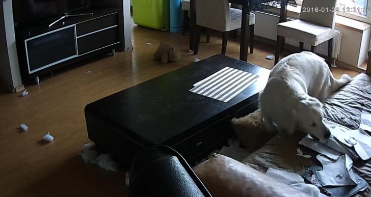 Esto es lo que realmente pasa cuando dejas a tu perro solo en casa