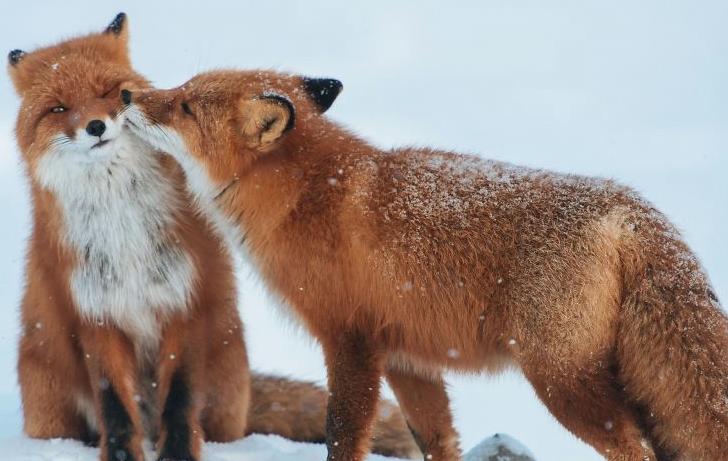 10 geniales fotos que prueban que los animales también se enamoran