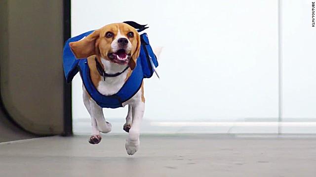 Este increíble perro te devuelve los valores que dejaste en el avión
