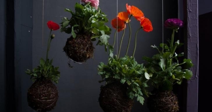 Mágicas esferas de arte moderno con plantas colgando por tu casa