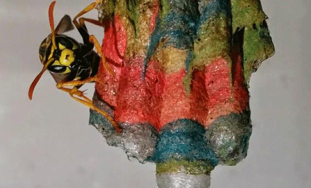 Le dieron papeles de color a estas avispas y crearon arte