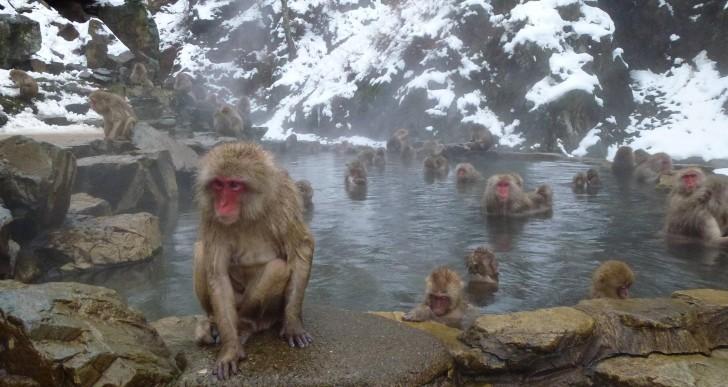 Este es el mono más rudo del mundo