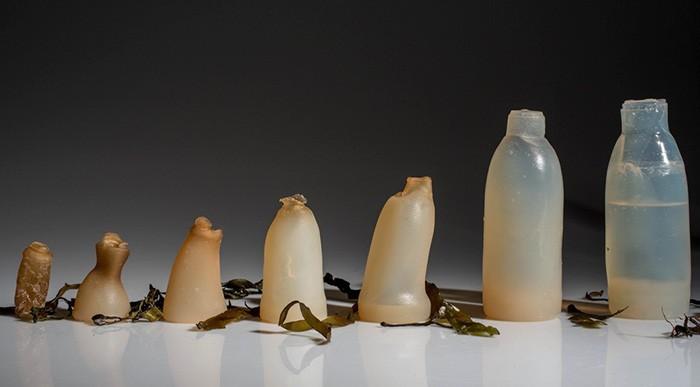Un estudiante desarrolló estas botellas 100% biodegradables