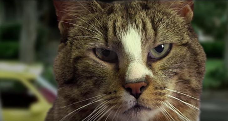 Así serían las películas si un gato reemplazara a los protgonistas