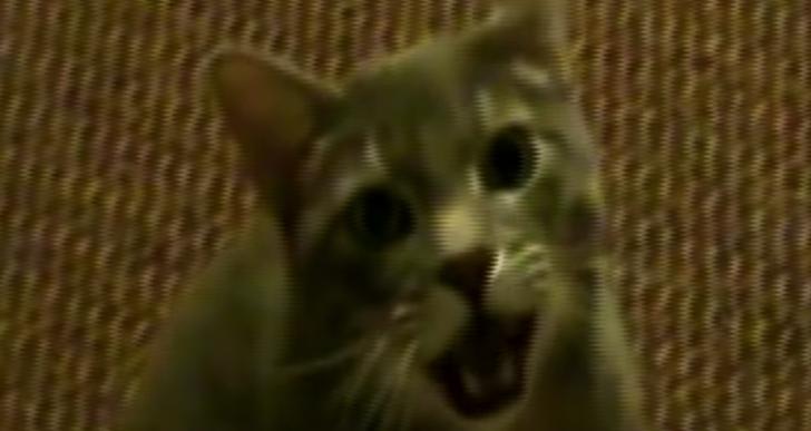 Así sería si los gatos dijeran «hey» en vez de «miau»