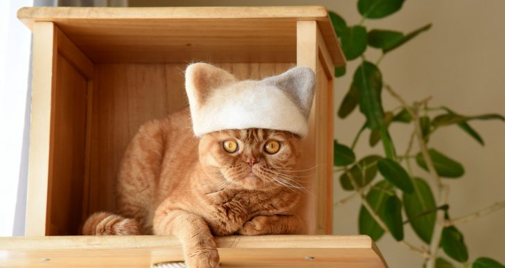 A estos gatos les hacen gorros con su propio pelo