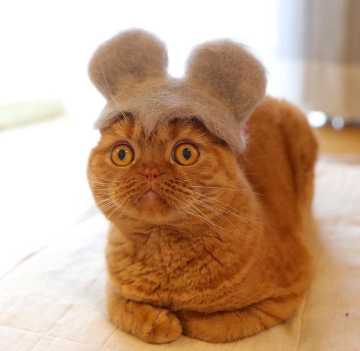cat-hat-3