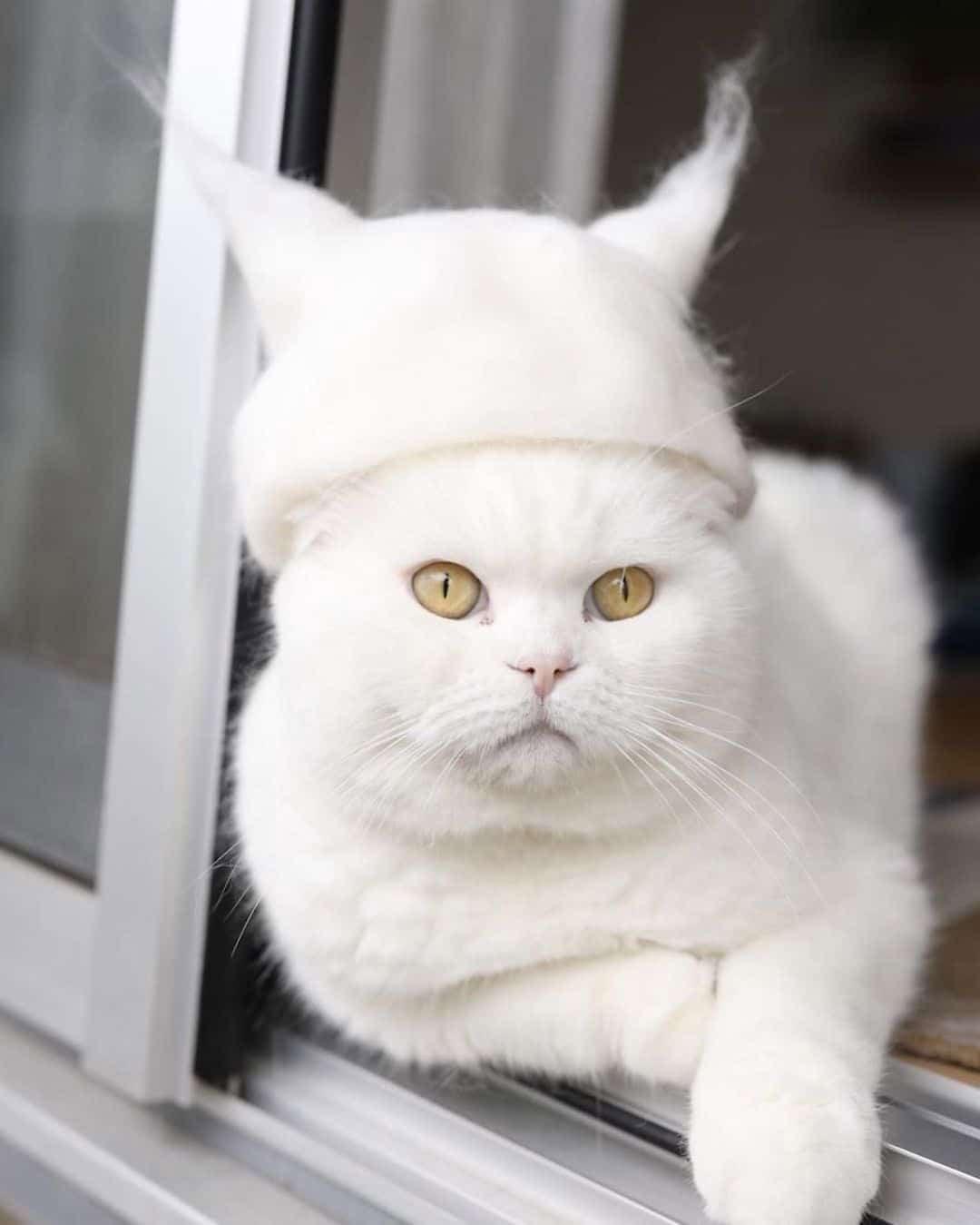 cat-hat-4
