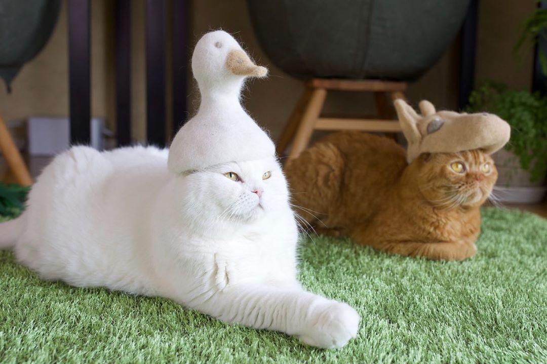 cat-hat-7