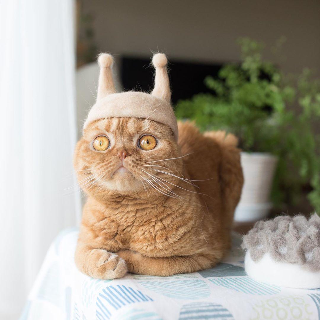 cat-hat-8