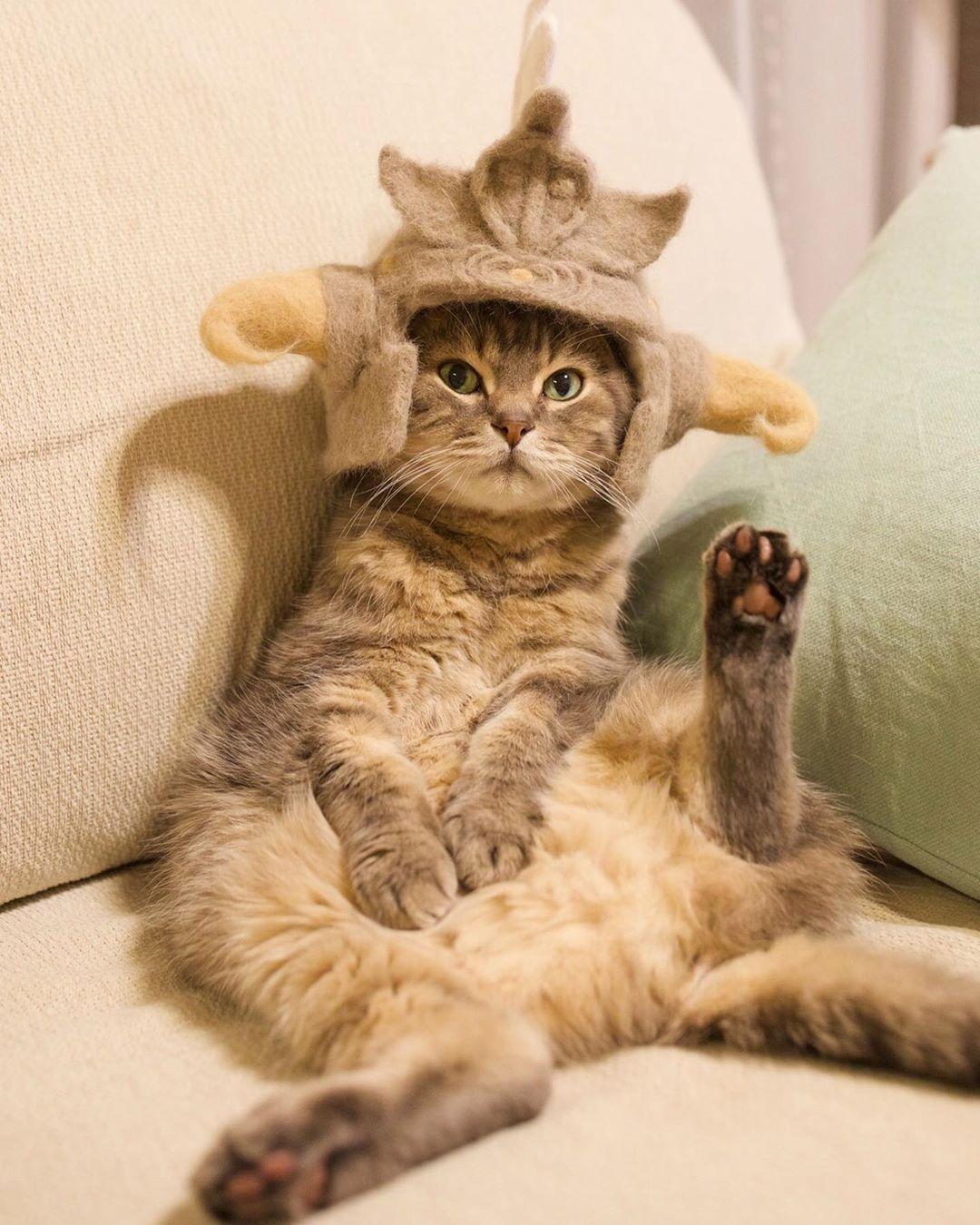 cat-hat-9