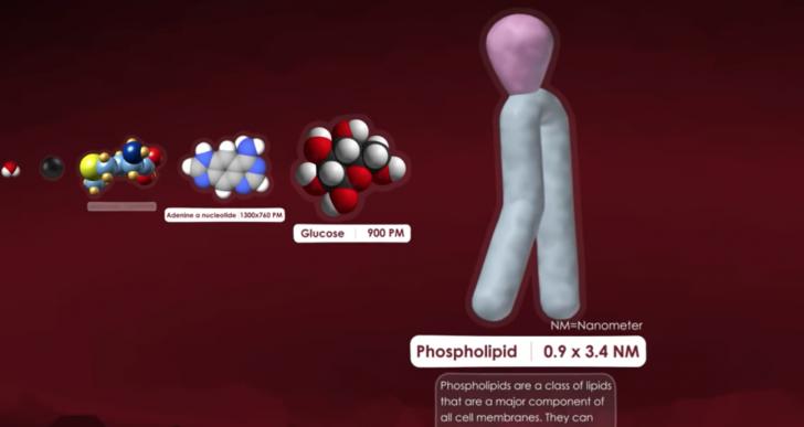 Una comparación visual del tamaño de células y moléculas