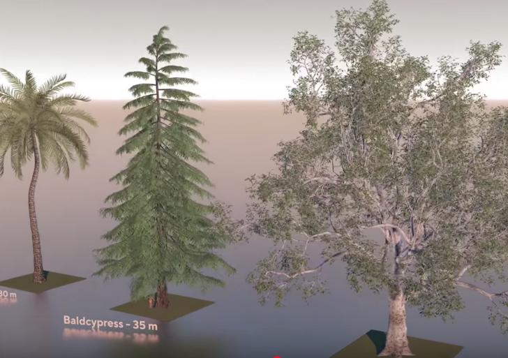 En este video puedes comparar el tamaño de todo tipo de árbol