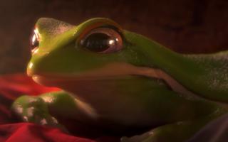 Un oscuro misterio se desenvuelve alrededor de unas ranas en este corto