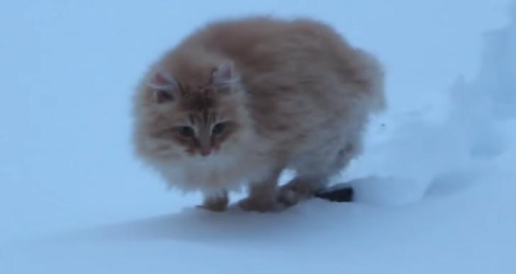 Una colección adorable de gatos en la nieve