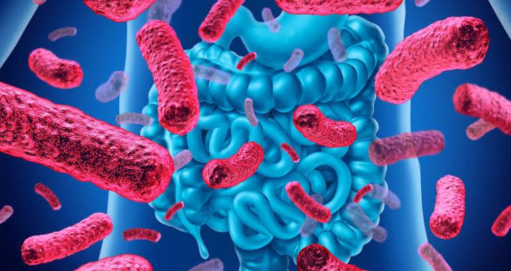 ¿Importa la hora en la que te tomas los probióticos?