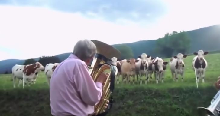 Increíbles reacciones de los animales con la música