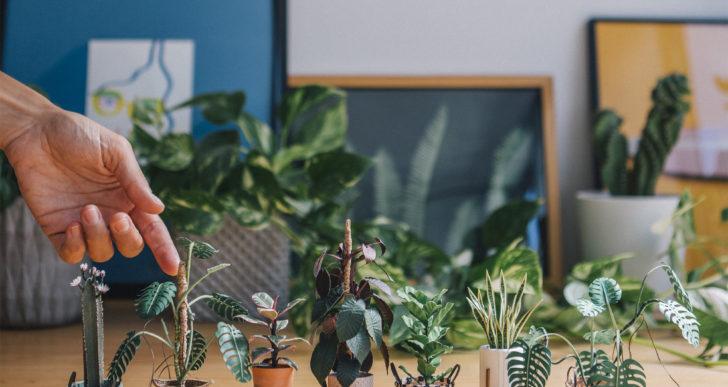 Te van a impresionar estas pequeñas plantas hechas de papel