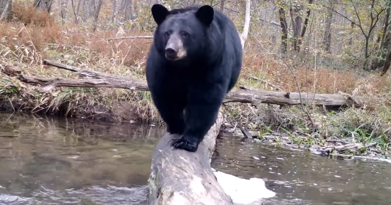 Te impresionará la variedad de animales que cruzan este tronco en el río