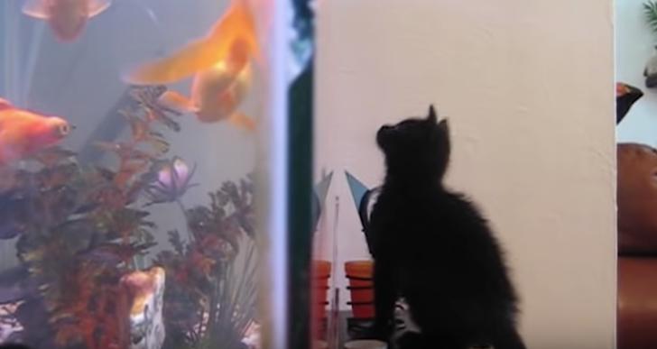 El impulso destructor de los gatos es algo real
