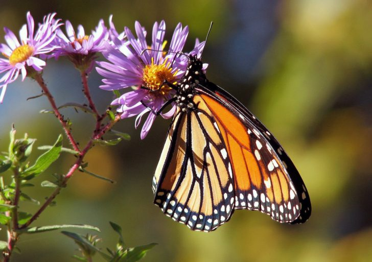 ¿Ya conoces el significado de las mariposas según su especie?
