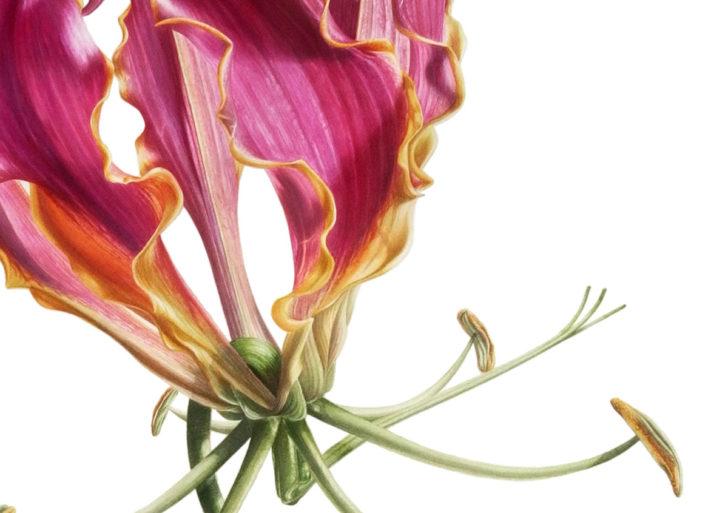 Elegantes flores en las acuarelas botánicas de Denise Ramsay