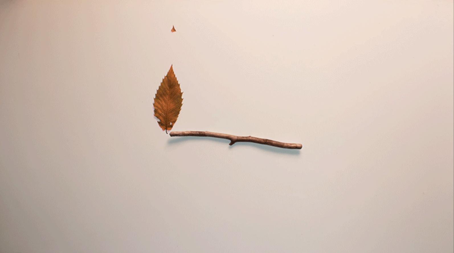 Un palo se quema con hojas secas que parece fuego